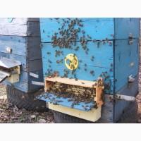 Продам бджолопакети в кількості 40 шт.Матки - Карніка F1, Карпатка.Рамка корпусна
