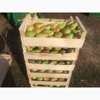 Продам ящики из шпона под ягоду, фрукты, овощи, грибы и рыбу