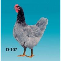 Голубой Доминант Д107. Разный окрас