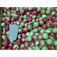 Продам яблоки Яблоко разных сортов