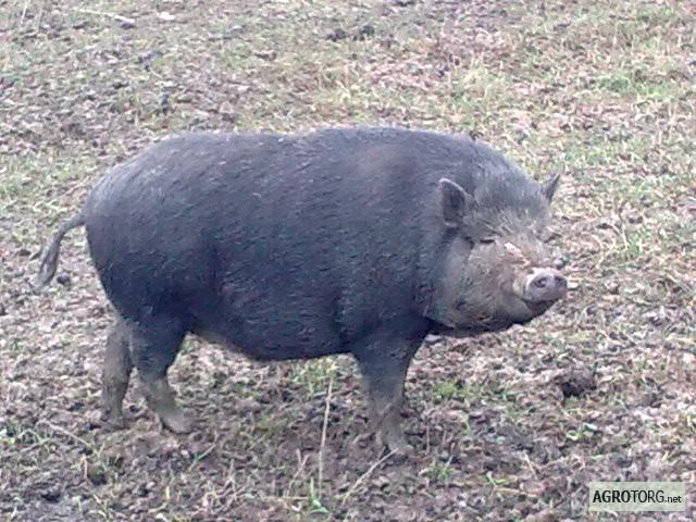 Шурпа из свинины рецепт с фото пошагово