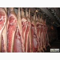 Продам полутуши свинные