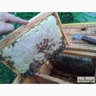 Продаю бджоломатки