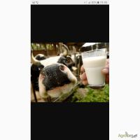 Куплю молоко оптом