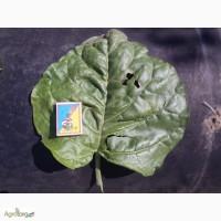 Семена табака махорки по цене 10 грн 1грм