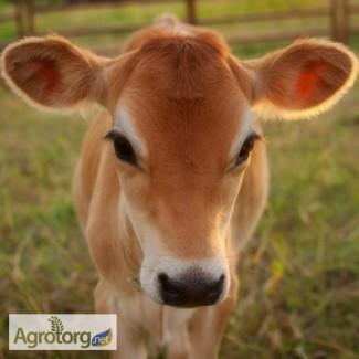 Замінник молока Дейрі.Кальф (для телят, з 5 дня, 80% молочної основи)