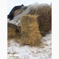 Продам солому пшеничну