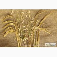 Производим закупку Зерновых и масличных культур (Ячмень)