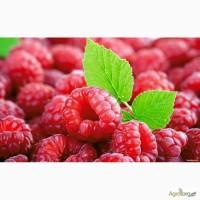 Куплю ягоди малини