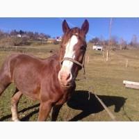 Продам доброго коня 7 років