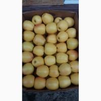 Продажем яблука