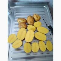 Картофель от производителя 11руб