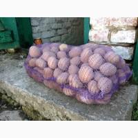 Продам картошку в большие кол-вах