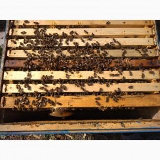 Продам пчелосемьи серой горной кавказкой породи бакфаст карника итальянка только