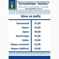 Рыба по доступным ценам