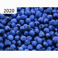 Продам терен крупным оптом! Урожай 2020г. Под заказ заготовим любой объеме