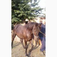Продаётся конь