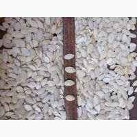 Продаем семена тыквы сезона 2019 г