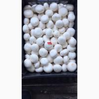 Продаю грибы шампиньоны со своего производства
