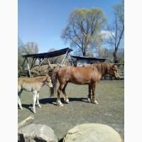 Продам Табун Лошадей (Мустангов )