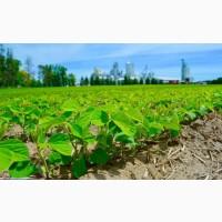 Зерновові Соя продовольча купимо