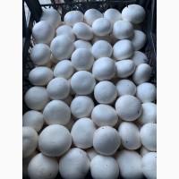 Продажа грибов шампиньонов от производителя
