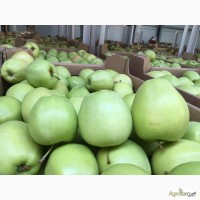 Яблоки польские, прямые поставки от производителя