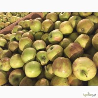 Купим яблоко от населения Украины
