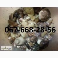 Продам грибы маслята солленно -вареные