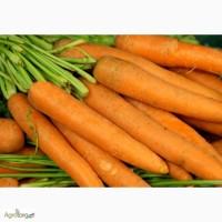 Морква Престо оптом, Черкаси