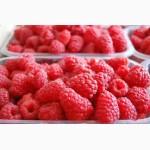 Агрокоопоратив продає свіжу ягоду