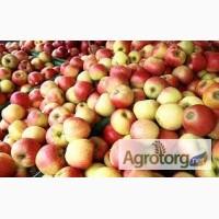 Куплю яблука на пром переробку