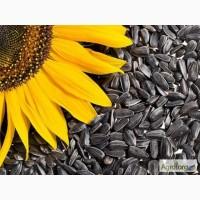 Закупка масличных культур (подсолнечник)