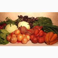 Заключаем договора на поставку свежих овощей
