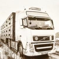 Послуги з перевезення худоби ВРХ ( Услуги скотовоза )