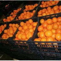 Продам мандарины мелким и крупным оптом сорта турция грузия испания фасованы в евро таре