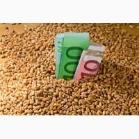 Куплю зерновые, масличные от 25т