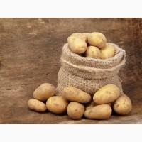 Продам Картофель продовольственный. Беларусь