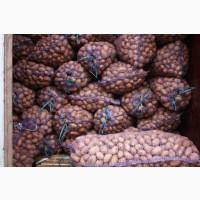 Куплю семенной картофель Ривьера, Пикассо, Гранада ( можно и др.сорта )