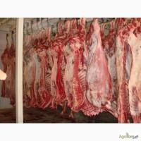 Куплю говядину в полутушах