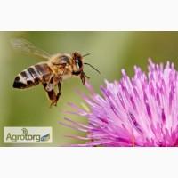 Продам пчелопакеты (карпатка)