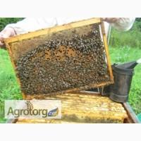 Породам пчелопакеты порода Украинская степная