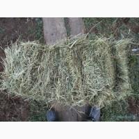 Продам сено луговое тюкованное от 1 тюка