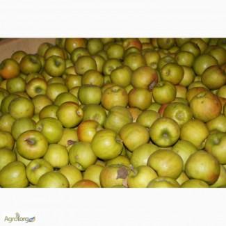 Продам яблоко на переработку