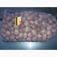 Продам посадкову картоплю сорт санте лабелла рокко
