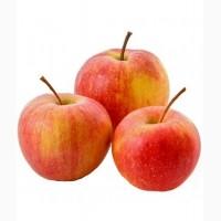 Ищем поставщика яблок (крупный опт)