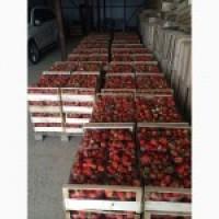 Свежая клубника( полуниця)