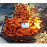 Продажа моркови оптом