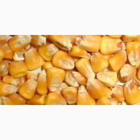Продам кукурузу с элеватора 140 т. Кировоградская обл