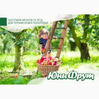 Куплю яблоки для промышленной переработки